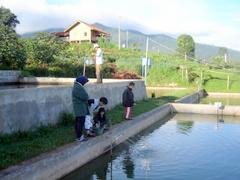 Di Kolam Ikan