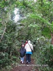 menuju canopy trail